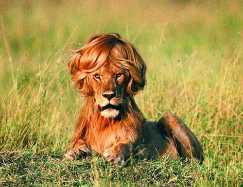 lion-cool-haircut